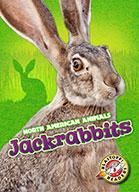 Jackrabbits