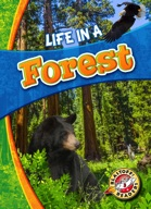 Life in a Forest