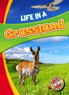 Life in a Grassland