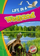 Life in a Wetland