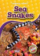 Sea Snakes
