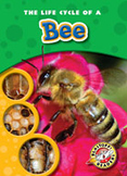 The Life Cycle of a Bee