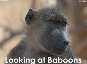 African Primates: Baboons - PDF presentation