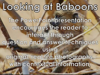 Baboon - Interactive PowerPoint presentation