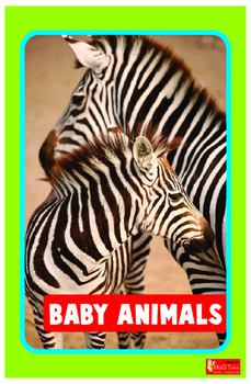 Baby Animals  Big Book