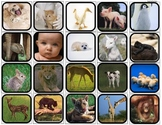 """Baby Animals Change & Grow Big"" Flashcards/Matching,Sorting for Autism"