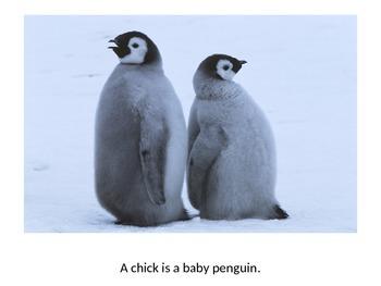 Baby Animals - Level A eBook