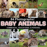 Photos Photographs BABY ANIMALS, clip art