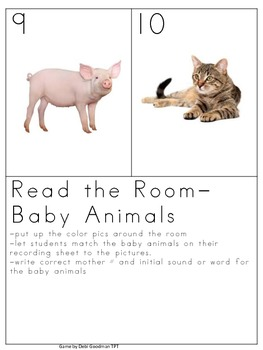 Baby Animals--Read the Room