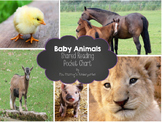 Baby Animals Shared Reading and Pocket Chart Center