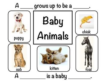 Baby Animals - VIPKID prop