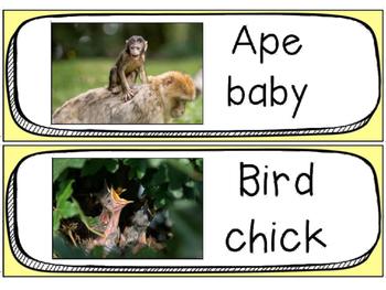 Baby Animals Vocabulary Cards