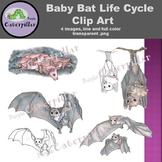 Baby Bat Life Cycle Clip Art