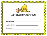 Baby Chick Birth Certificate for Hatching Chicks in the Classroom