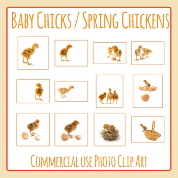 Baby Chick - Spring Chickens Photo / Photograph Clip Art Set for Commercial Use