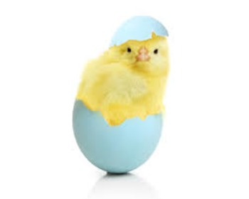 Keyboarding Puzzle: Baby Chick in Egg, Easter