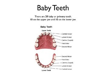 Baby Dental PowerPoint