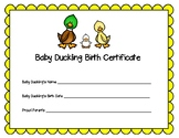 Baby Duckling Birth Certificate for Hatching Ducks in the Classroom