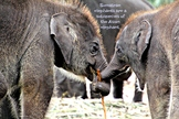 Baby Elephants Photo