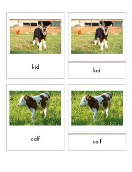 Baby Farm Animals (3 Part Montessori Cards)