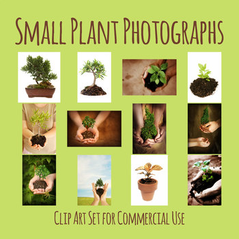 Baby Plant / New Growth / Development Concept Photos / Clip Art Commercial Use