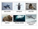 Baby Sea Life cards for Safari Toob
