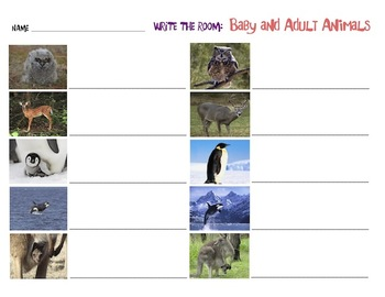 Baby and Adult Animals - Write the Room Activity
