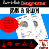 Body Systems: Brain and Neuron (Back-to-Back Diagrams)