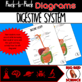 Body Systems: Digestive System (Back-to-Back Diagrams)