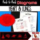 Body Systems: Lungs and Heart (Back-to-Back Diagrams)