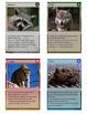 Backyard Animals Trading Cards
