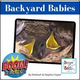Backyard Baby Birds: A photo reader for bird lovers