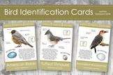 Backyard Bird Identification Cards- Montessori