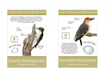 Backyard Bird Identification Cards- Montessori
