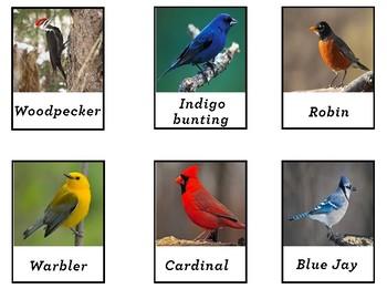Backyard Birds 3-part cards