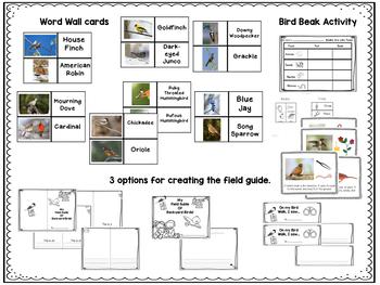 Backyard Birds Lets Make a Field Guide FOR LITTLE KIDS