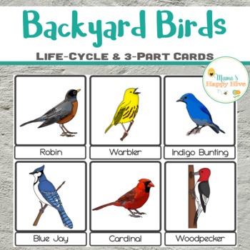 Elegant Backyard Birds Life Cycle U0026 3 Part Cards