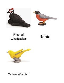 Backyard Birds Nomenclature