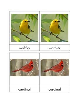 Backyard Birds - Three/Four Part Cards