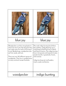 Backyard Birds - Three/Four Part Cards