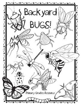 Backyard Bugs / Insects