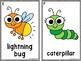 Backyard Bugs Write The Room