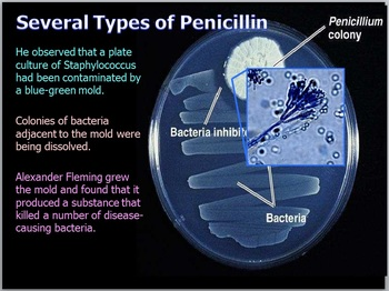 Bacteria Lesson
