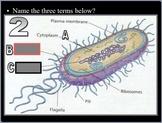 Bacteria Quiz Game