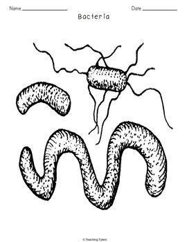Bacteria Crossword Puzzle