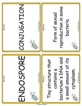 Bacteria Vocabulary Cards
