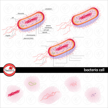 Bacteria Cell Science Diagram Clipart by Poppydreamz