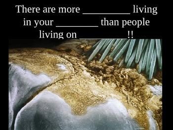 Bacteria Cloze