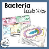 Bacteria Doodle Notes - Prokaryotic Cells