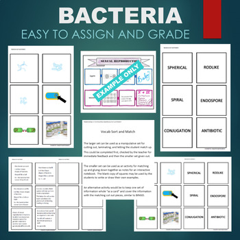 Bacteria (Endospore, Sphere, Rod, Spiral, etc) Sort & Match Activity